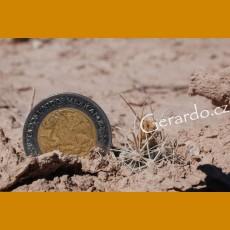 Ancistrocactus pinkavanus GCG 10916 Poza El Mezquite, SW of Cuatrocienegas, Coah. (10 SEEDS)