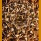 """Gymnocalycium stellatum """"obductum"""" VS 140 Quilino,  600m, Córdoba, Arg. (10 SEEDS)"""